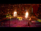 Шоу тигров в Спб Цирке